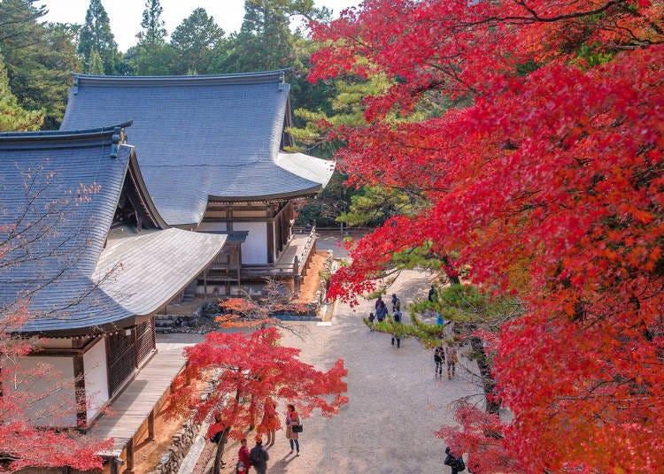 京都賞楓景點③整個地區全被紅葉覆蓋的「高雄地區」
