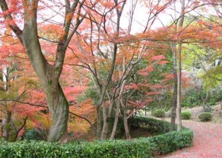 京都賞楓景點④只有在地人才知道的私房景點「圓山公園」