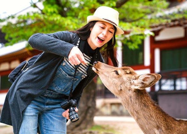 第一次奈良自由行就上手!特色景點、美食、伴手禮懶人包