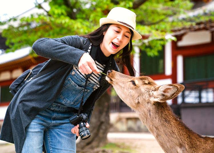 Discover Nara - Japan's Cute, Spiritual Prefecture