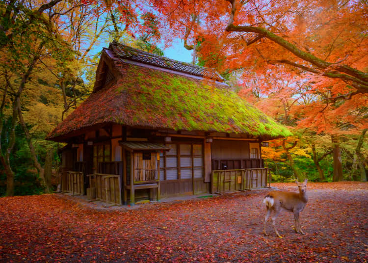 Top 5 Spots for Autumn Leaves in Nara Japan