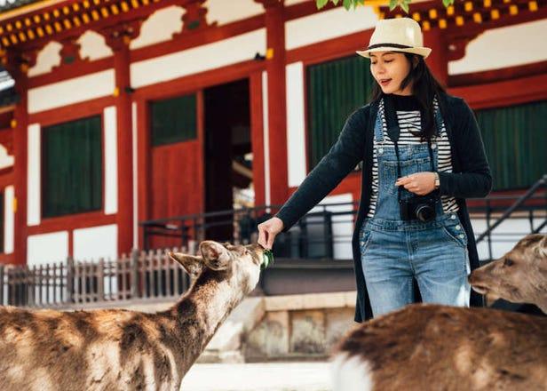 【奈良自由行景点】到古都奈良必访的神社、寺庙全攻略