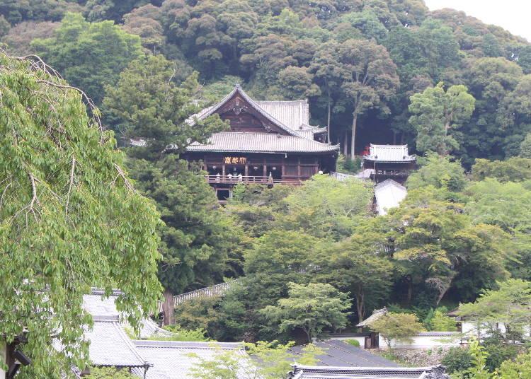 ボタンが美しく咲き誇る観音霊場・長谷寺