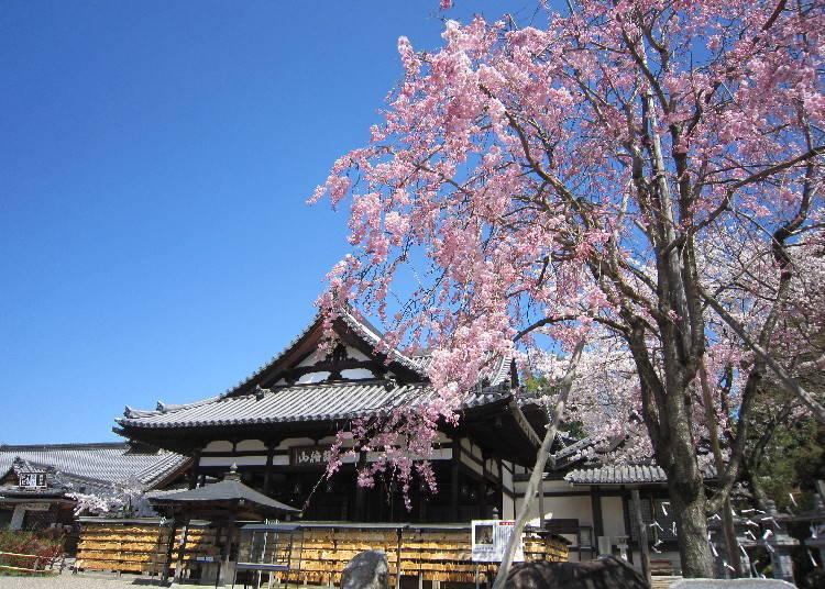 以日本三大文殊菩薩之一聞名的古寺「安倍文殊院」