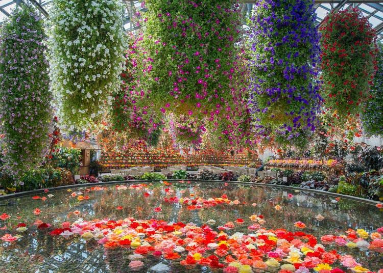 日本三重自由行必去景點③宛如夢幻世界的「名花之里」