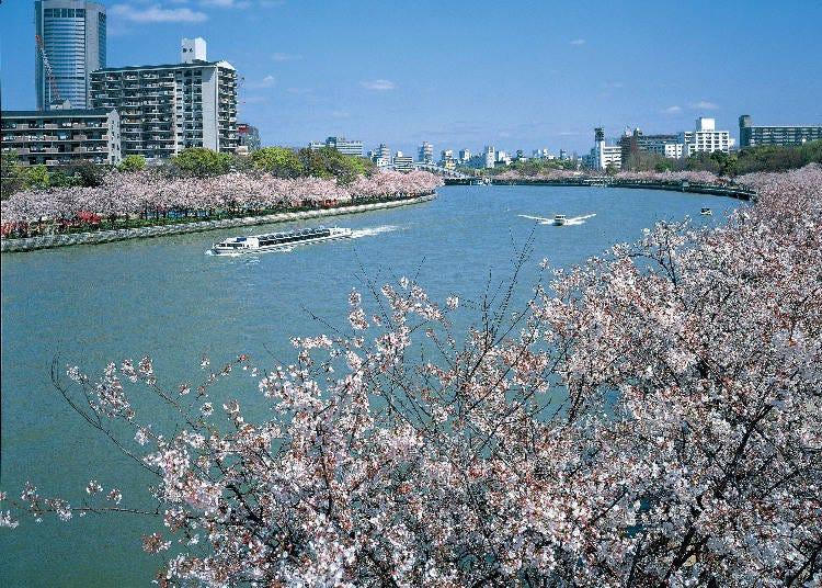 2:圧巻の桜並木「毛馬桜之宮公園」