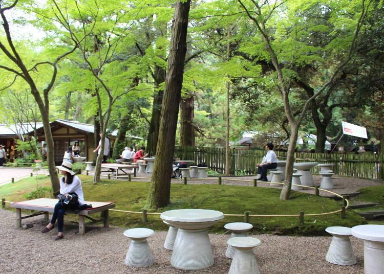奈良鹿、春日大社和當地美食!教你一天玩遍「奈良公園」