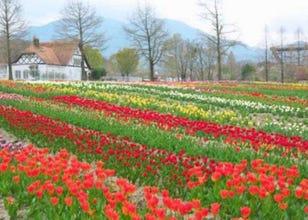 "Shiga Japan Guide: Gorgeous Flowers, Food and More at Shiga Agricultural Park ""Blumen Hugel Farm""!"