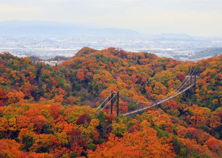 Osaka's Best Secret Spot for Autumn Foliage: Hoshida Park's Hoshi no Buranko Suspension Bridge
