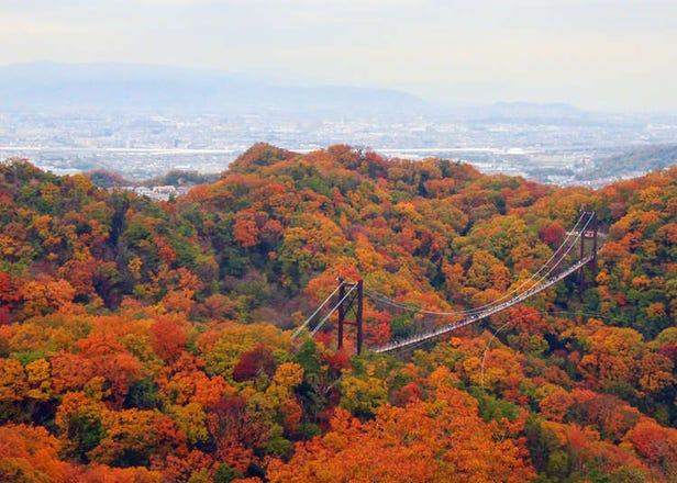 Osaka's Best Kept Secret for Autumn Foliage: Hoshida Park's Hoshi-no-Buranko Bridge