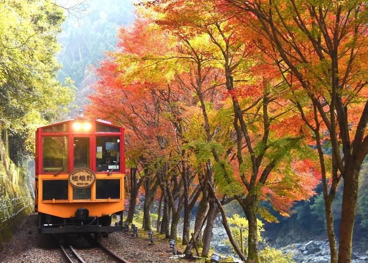 5. Sagano Romantic Train: Enjoy the beauty of the valley