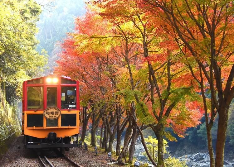 渓谷美を楽しむ「嵯峨野トロッコ列車」