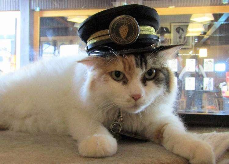 와카야마 전철의 고양이 역장님 '니타마'를 만나러 가자