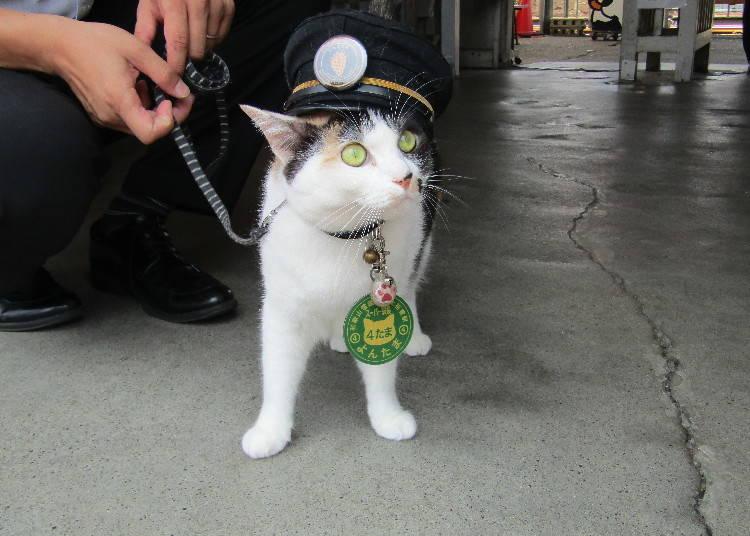 貴志駅から5つ手前の伊太祈曽駅でも猫駅長「よんたま」に会うことができますよ!