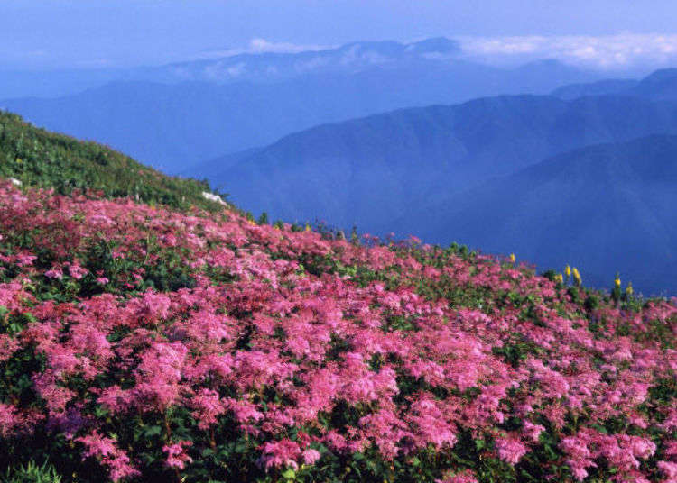 Reach the Peak in 20 Minutes! Great Views and Casual Hiking at 1,300m-tall Mount Ibuki