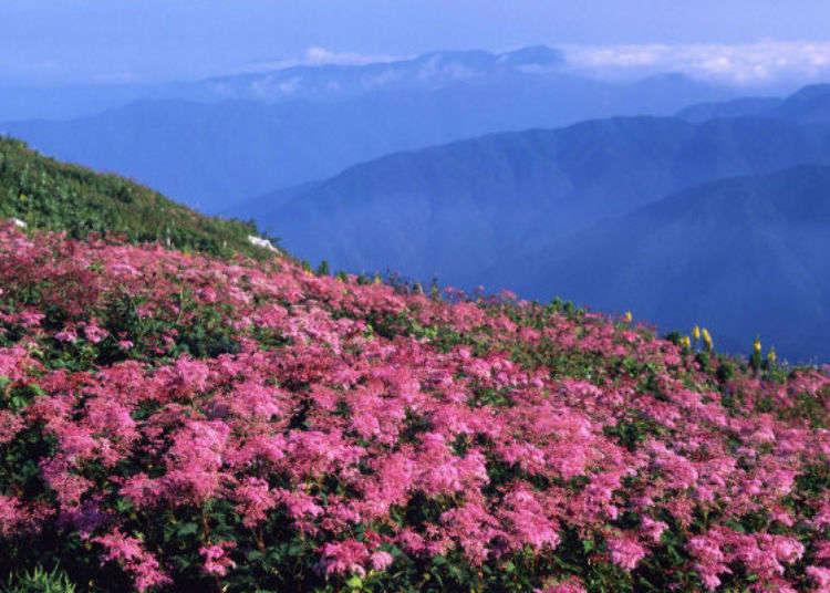 最短20分鐘輕鬆攻頂海拔1,300公尺!眺望琵琶湖絕景的伊吹山散步導覽