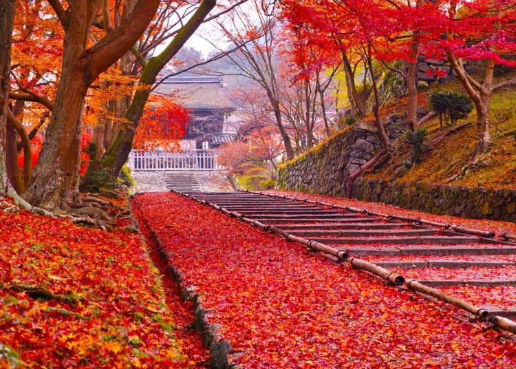 3. (Kyoto) Bishamon-do Temple: Beautifully swept leaves