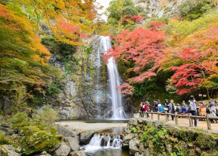 關西賞楓景點②大阪:可以品嘗到炸楓葉的「箕面公園」