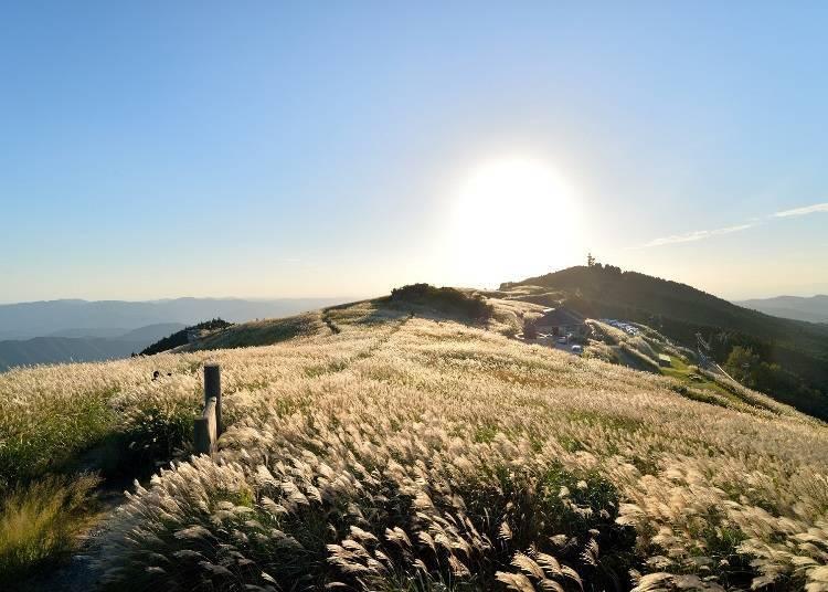 紀美野町是「有絕美景色芒草草原的地方」