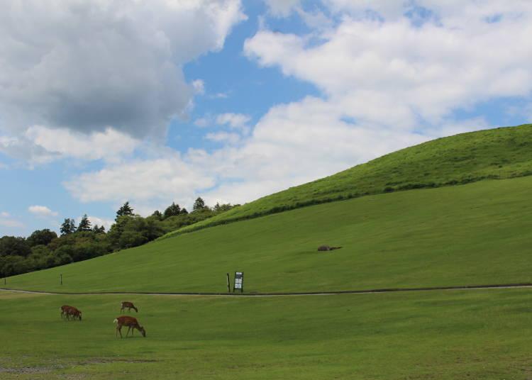 奈良若草山的特色&前往交通方式