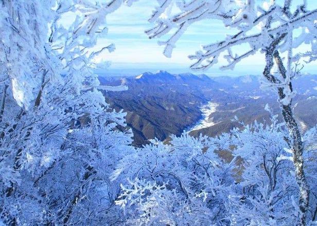일본 나라현 겨울여행 - 환상적인 겨울풍경 '미우네산 무빙 축제'