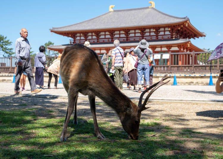 5. Kintetsu Shumatsu Free Pass: 3 Days of Unlimited Rides Around Nara & Mie on Japan's Largest Private Railway!