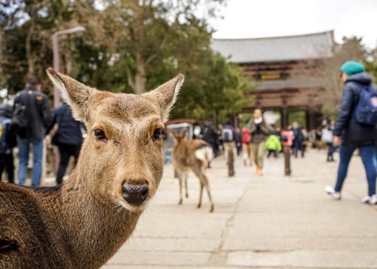 前往「奈良」的最佳方式:利用JR「大阪車站」最簡單
