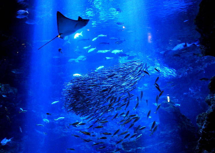 7) Kyoto Aquarium: A relaxing spot to meet aquatic creatures