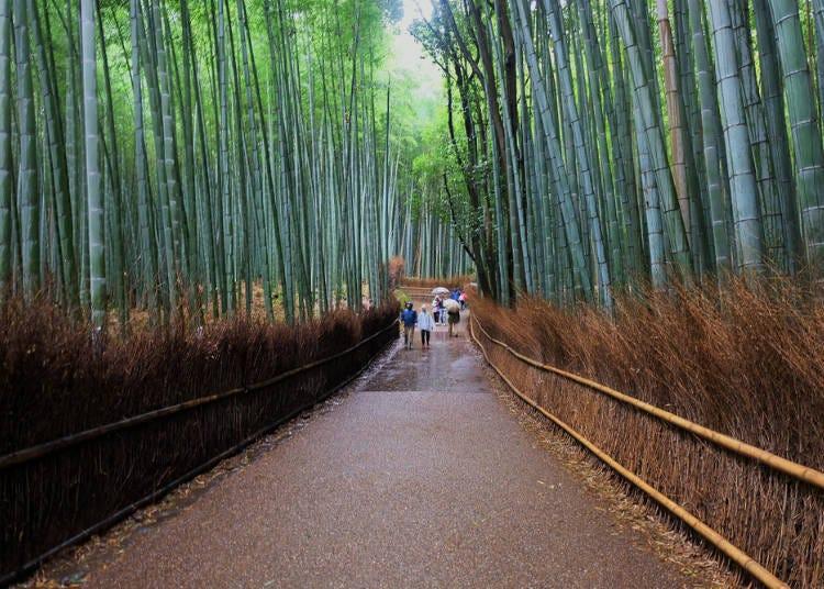 2:清廉な空気が漂う竹林の小径