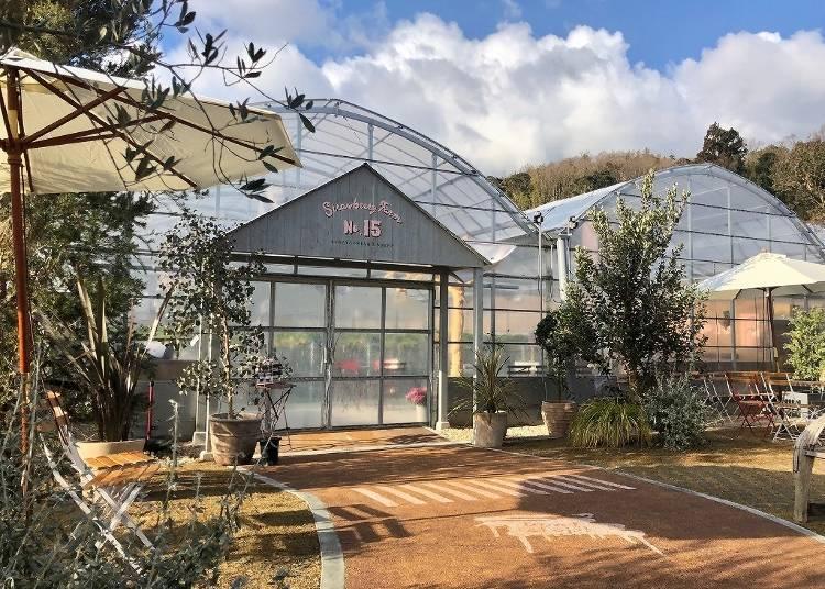 3.大型ガーデン敷地内「Strawberry Farm」でいちご狩り【大阪】