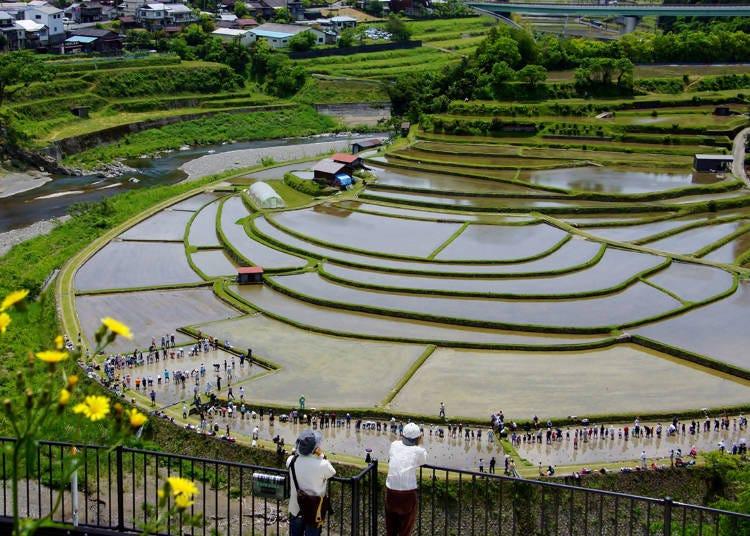 2) Aragi Island (Wakayama): Naturally-sculpted landscapes