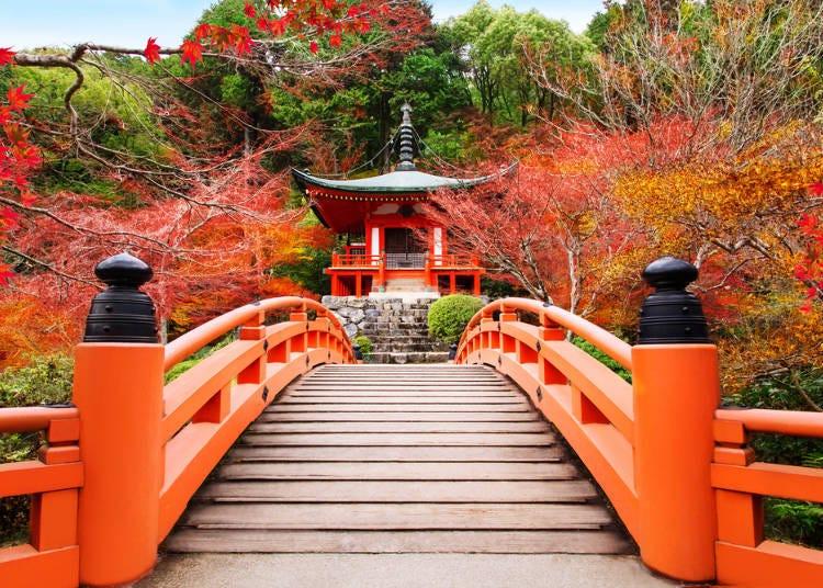 所謂的「京都式風景」只是其中生活的一角