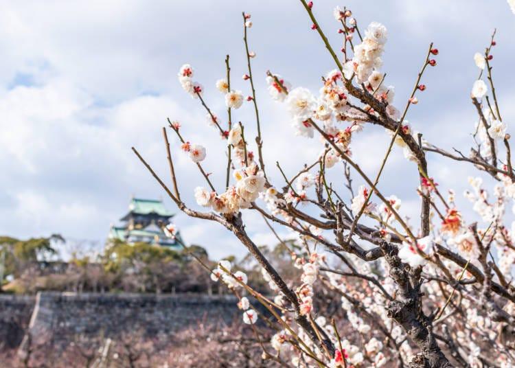 ■大阪市内の2月の気候