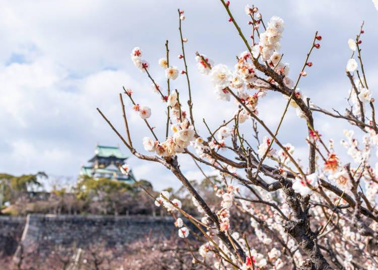 ■오사카 시내의 2월 날씨
