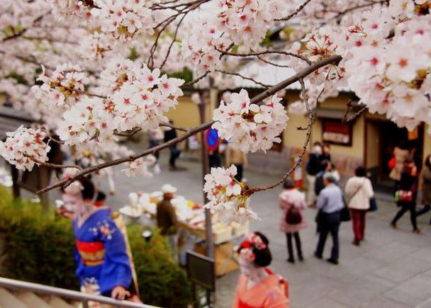 京都の春(3月・4月・5月)の天気と服装まとめ【北部と南部で違う】