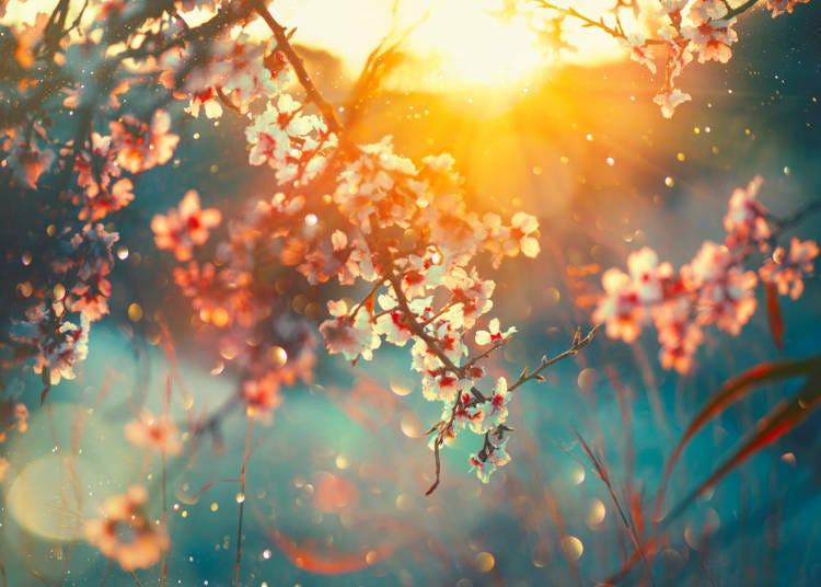 ■교토의 3월 날씨
