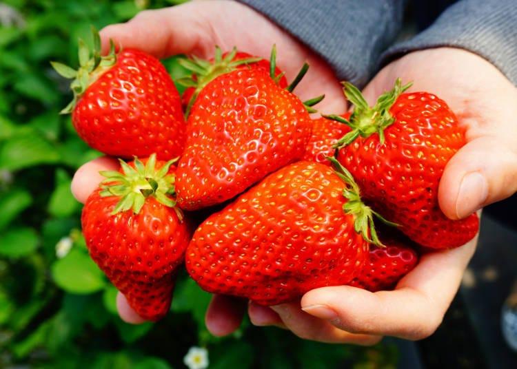 The taste of Japanese strawberries