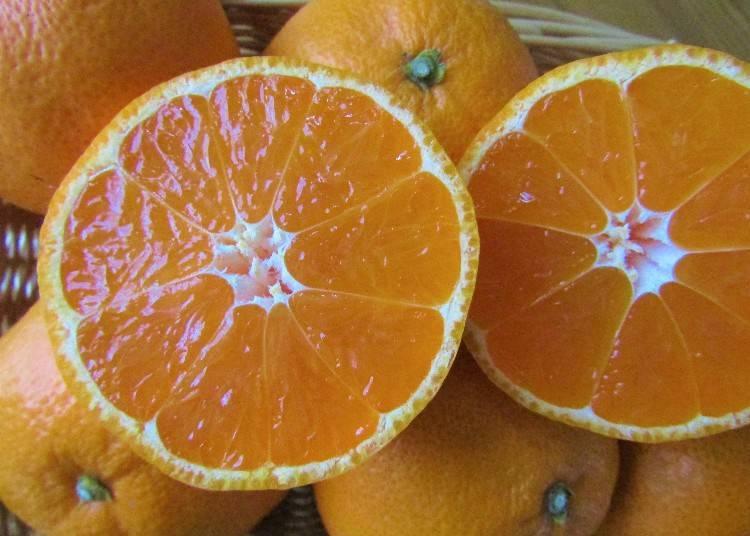 和歌山的「橘子」為什麼這麼受歡迎呢?
