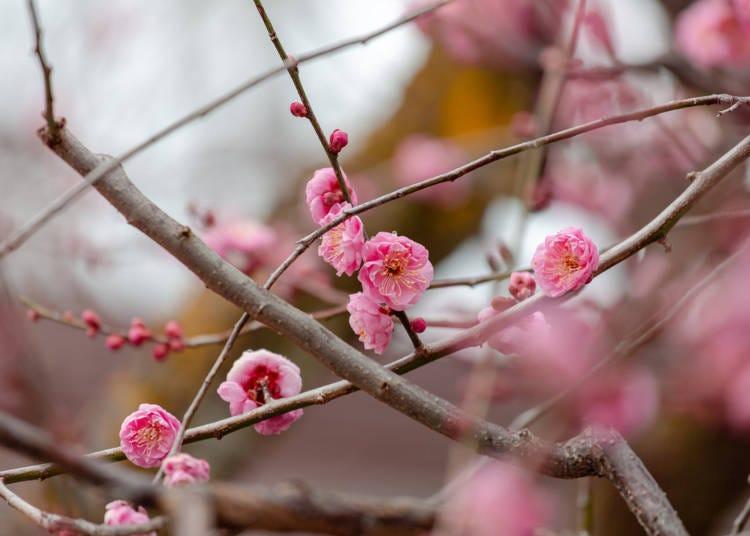 ■교토의 2월 날씨