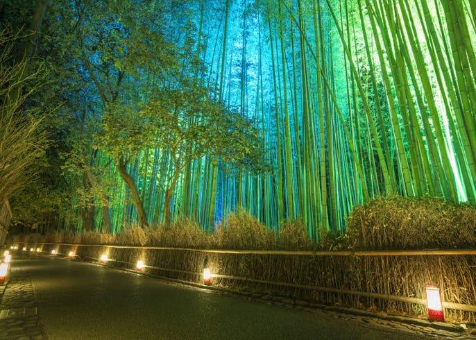 観光 京都 自然