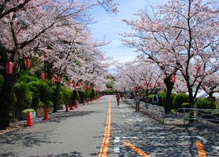 오사카의 벚꽃명소 10선. 현지인이 추천하는 꽃놀이 스팟은 바로 여기!