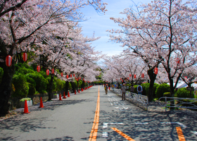10 Best Cherry Blossom Spots in Osaka - According to Locals! (2021 Guide)