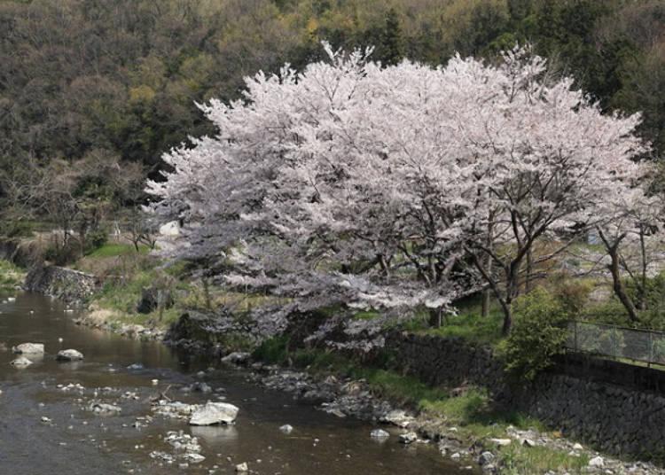 8. Osaka's Gorge and Settsukyo Park
