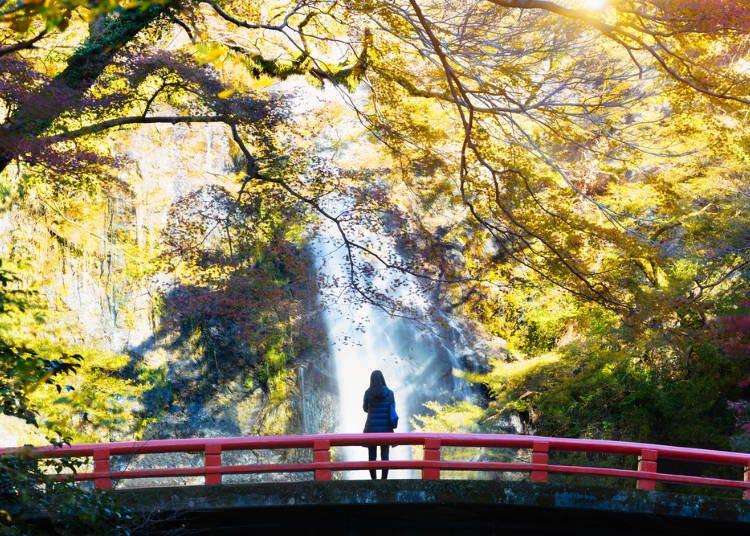 5. Cool Off at the Illuminated Minoh Falls