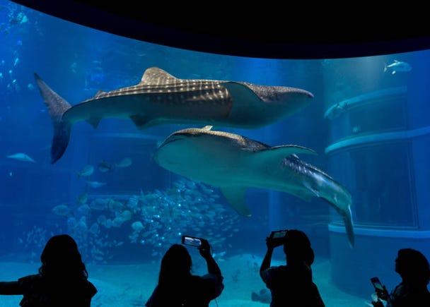 1.涼しげに泳ぐ海の生き物たちを観る
