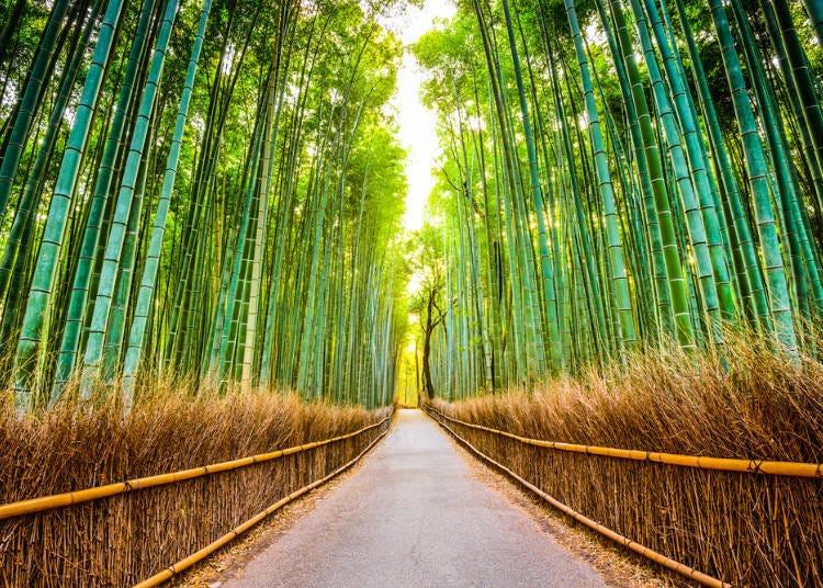阪急電鐵必去車站&周邊景點⑥京都線-嵐山站(經由嵐山線換車)