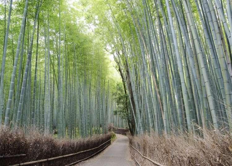 バスや徒歩より便利?「レンタサイクル」で巡る京都・嵐山観光ガイド&プラン