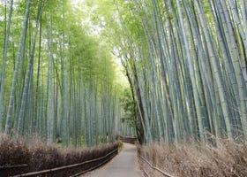 京都租腳踏車深度遊嵐山!租借方法、推薦景點、注意事項