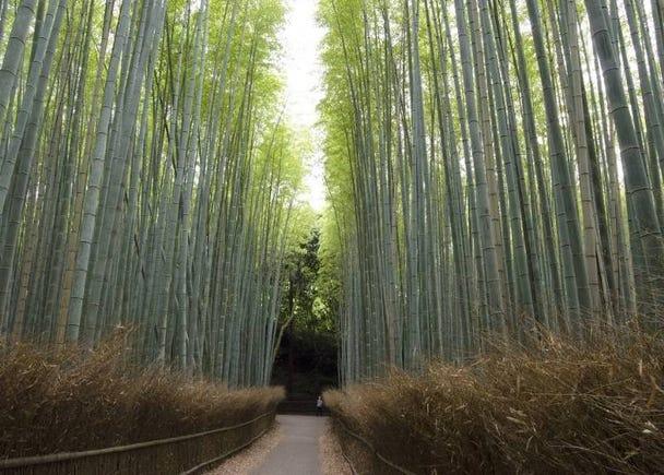 涼しげな緑が頭上に広がる竹林の散策路「竹林の小径」