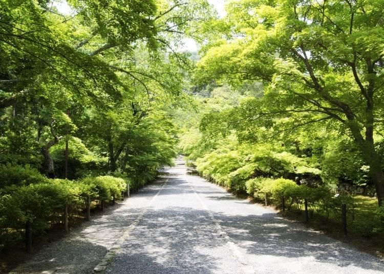 京都嵐山腳踏車之旅景點⑦位於環繞在寂靜氛圍大自然中的山中寺廟「二尊院」